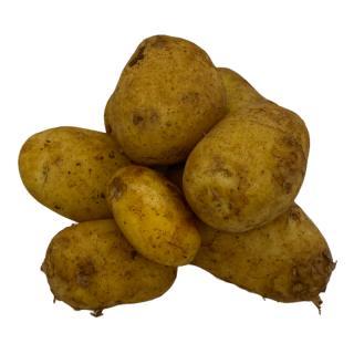 Frühkartoffel Annabelle